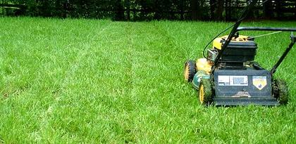 Lawn Mowing Best Tips - Alberto Lawn Care